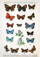 On the color and color-patterns of moths and butterflies